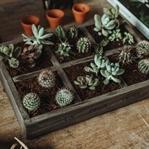 Mini Kaktus Garten