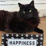 Mutluluk Kedide:)