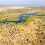 Safari im Okavango Delta, Botswana