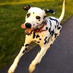 Sommer in Bremen und Umgebung mit Hund