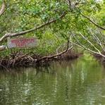 Woolverton Trail – Kanu und Geocaching in Florida
