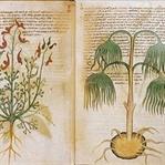 Yıllardır Çözülemeyen Gizem Voynich El Yazması