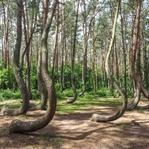 Der mystische Krumme Wald & die einsame Uckermark