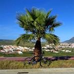 Porto Santo – Urlaub mit dem Rad