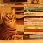 Tezgah Kitabevi ve Diğer Alışverişlerim * Haziran