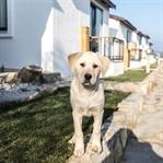 Evcil hayvanınızla gidilecek otellerin listesi