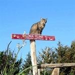 Kedi Cenneti Sardinya Plajı Su Pallosu