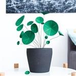 Chinesischer Geldbaum (Pilea) aus Papier