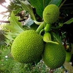 Daha Önce Hiç Görmediğiniz 5 İlginç Meyve