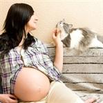 Hamilelikte gizli tehlike: Toksoplazma