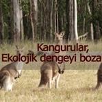 Kangurular Dünyaya Tehtit Olabilirler !