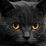 Kara Kediler Neden Uğursuz Görülüyor?