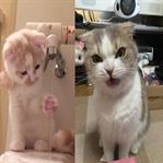 Kedilerin İlginç ve Keyifli Görüntüleri