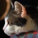 Kedilerle İlgili  Bir Gizem: Henry'nin Cebi