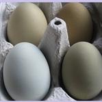 Yeşil Yumurta Faydaları