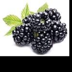 Antioksidan Gıdalar ve Faydaları