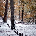 Doğa Fotoğrafları Çekmenin Püf Noktaları Nelerdir?