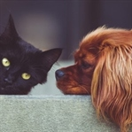Evcil Hayvan Sahibi Olmak İçin 5 Neden