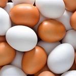 Kahverengi mi Beyaz Yumurta mı Daha Besleyici?
