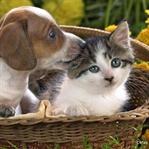 Sevimli Dostlarımız Kediler ve Köpekler