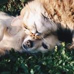 Kedi Köpek Fotoğraf Yarışması