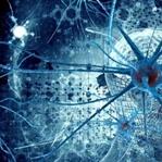 Bağımlılığın nedeni terörist nöronlar mı?