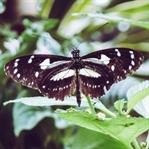 Dünyanın En Güzel Kelebekleri