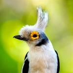 Dünyanın En İlginç 20 Kuş Türü
