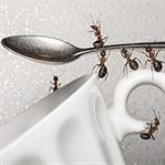 Evinizi İstila Eden Karıncalardan Kurtulma Yolları