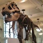 Fosil Nedir ve Fosil Nasıl Oluşur