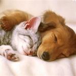 Kedi ve Köpek Yıkarken Dikkat Edilmesi Gerekenler