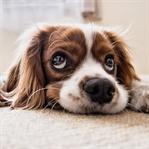 Köpek Beslemenin 6 Faydası