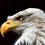 Vahşi Hayvanları Fotoğraflamak için İpuçları
