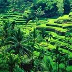 Bali, Endonezya'da Yapmanız Gerekenler