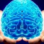 Beynimiz Hakkında 10 İlginç Bilgi