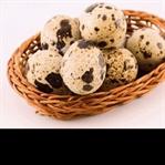 Bıldırcın Yumurtasının Faydaları ve Zararları