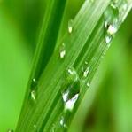 Çimen Suyunun Etkileri
