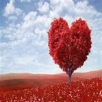 En güzel rivayet: Sevgi günü... Sevgililer günü...