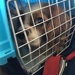 Evcil Hayvan İle Fransa Yolculuğu