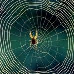 Mucizevi Canlılar: Örümcekler