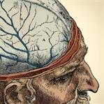 Geçmişten Günümüze İnsan Beyninin Evrimi