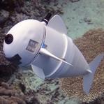 Robot Balık Yaptılar