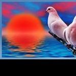 Çocuk ve Güvercinler