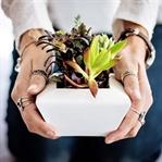 Evde Bitki Yetiştirmenin Mucize Gibi 5 Faydası