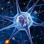 Evrimsel Süreçte Sinir Sistemi'nin Evrimi