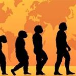 İnsandaki Evrimsel Kalıntılar: Körelmiş Organlar