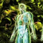 İnsanın En Büyük Organları Neresidir