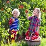 Biraz da elmanın kırmızısını seçelim...