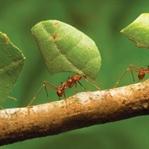 Karıncalar Dünyası