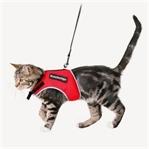 Kedi Sahiplenmek İsteyenlere Öneriler